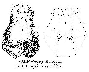 Western, G (1892): Journal of the Quekett Microscopical Club (ser. 2) 4